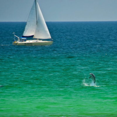 Dolphins playing just off the beach