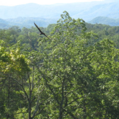 Soaring bird from deck